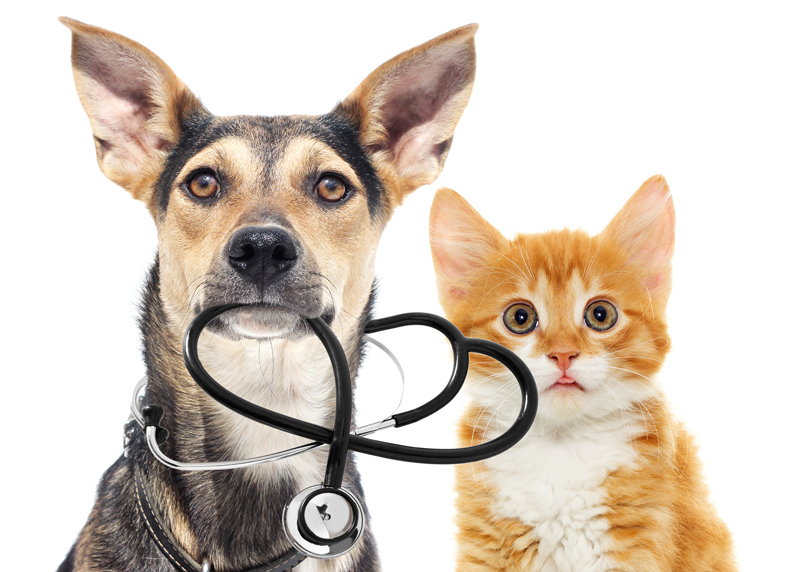 Pets | Gympie Veterinary Services