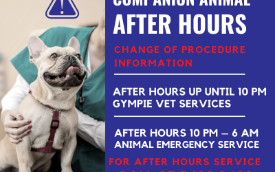 After Hours Information